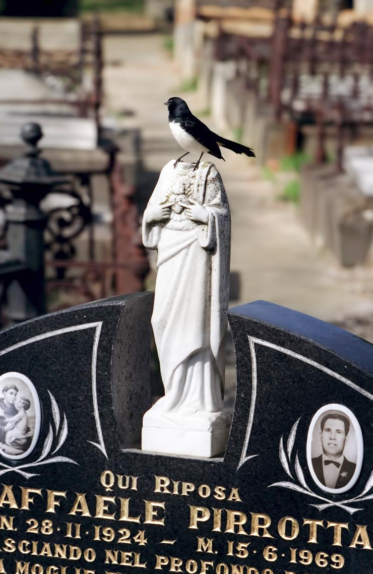 A bird sits on a grave stone in a cemetary