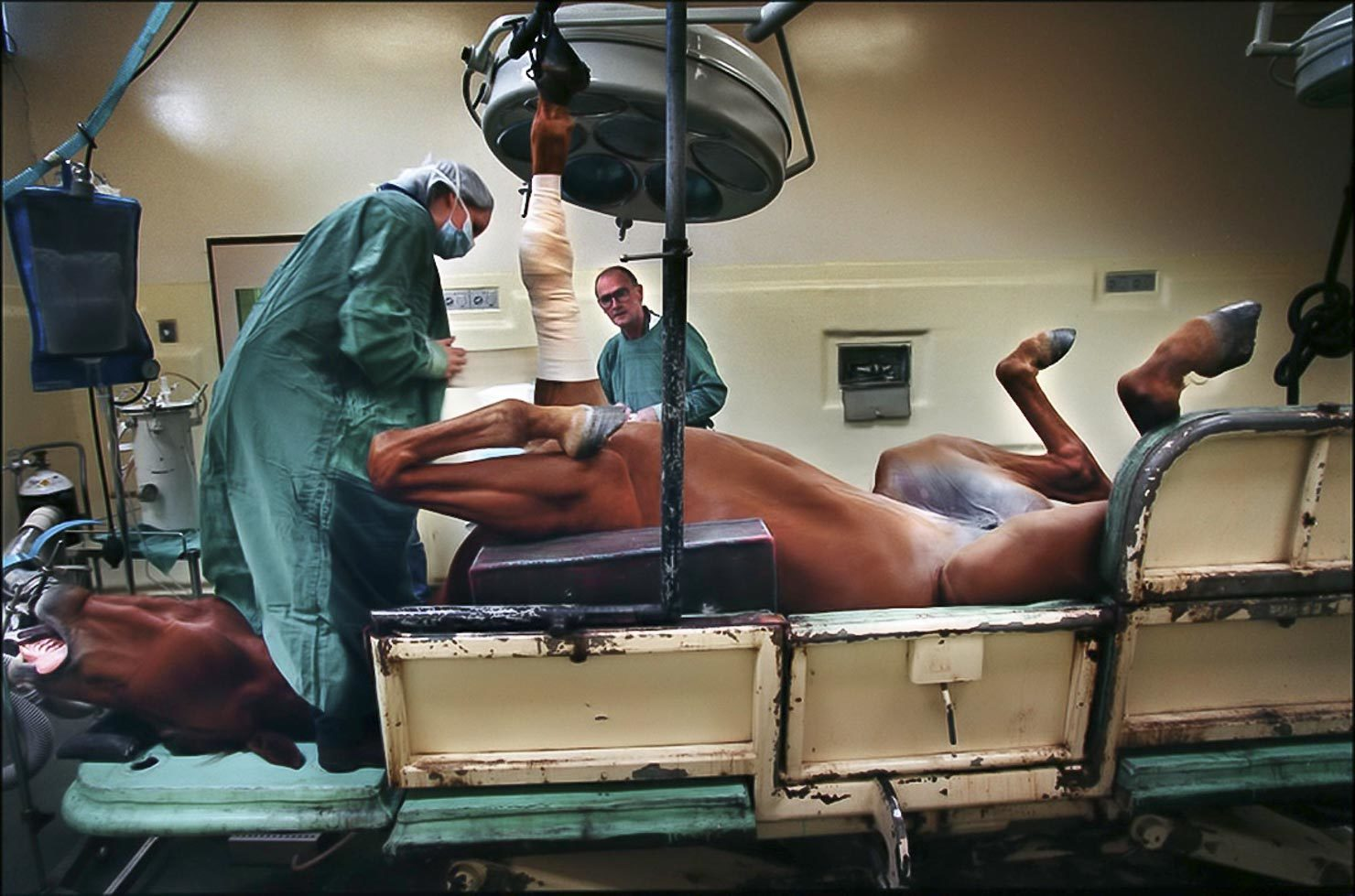 Veterinarian performs an operation on a horse