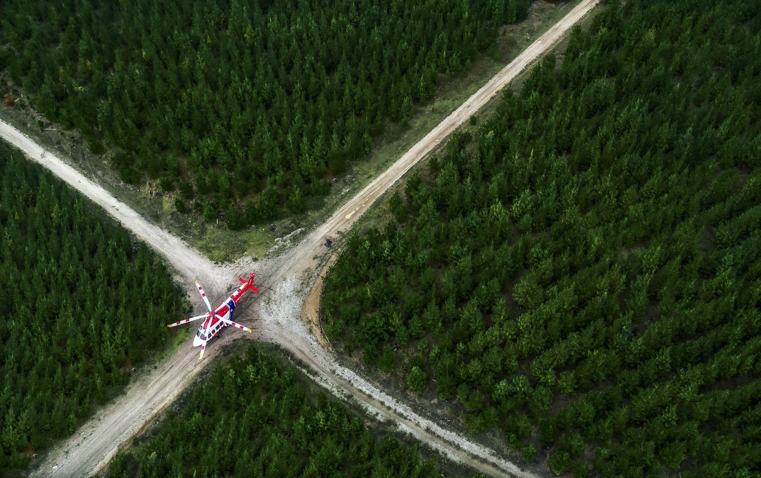 Ambulance helicopter in a pine plantation